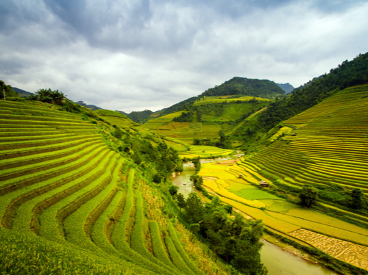 Creating a 'Rice Bond' to finance climate resilience, water and food security